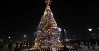 В София грейна коледната елха
