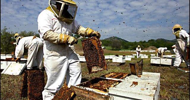 Пчеларите кандидатсват за държавна помощ