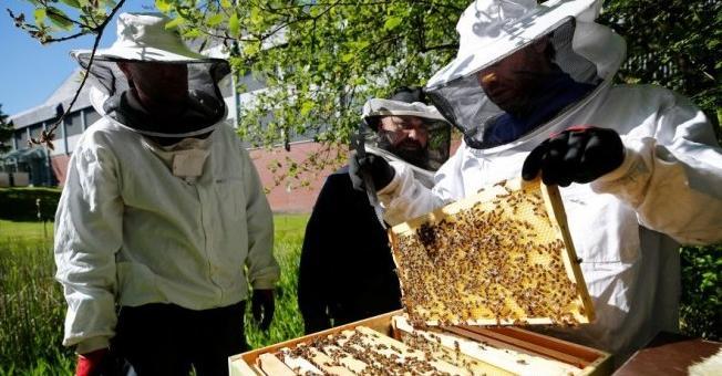 Унищожават над 40 кг мед заради нарушения