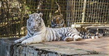 Посрещаме деня с любими животни от зоопарка в Стара Загора