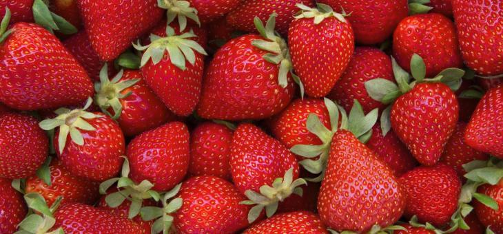800 свободни работни места за бране на ягоди в Испания
