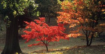 80 дръвчета ще засадят от ВМРО в детските градини