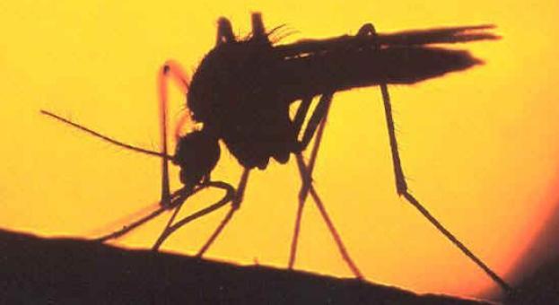 По-малко комари заради топлата зима?