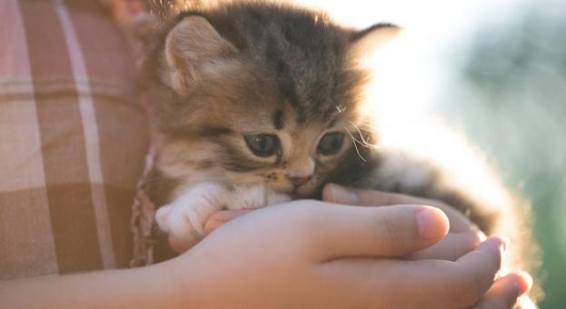 Гушкането на котка намалява стреса