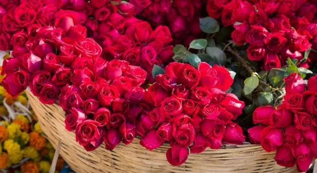 Рекорден износ на рози от Турция за Свети Валентин