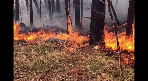 Над 20 милиона евро костват на руската хазна пожарите в Сибир