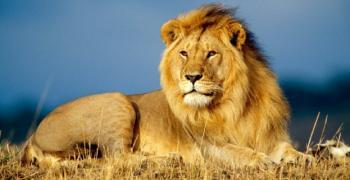 Световен ден на лъва