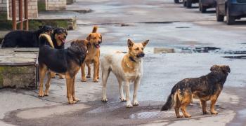 Ветеринарите в Казанлък на протест