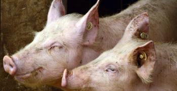 В Стара Загора обсъждат превантивни мерки против болестта Африканска чума по свинете