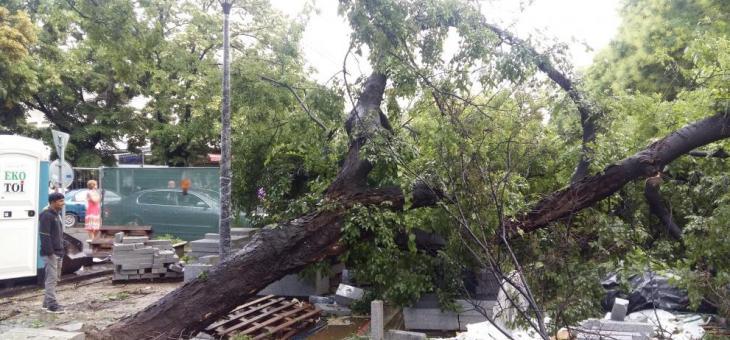 Дърво падна в центъра на Стара Загора