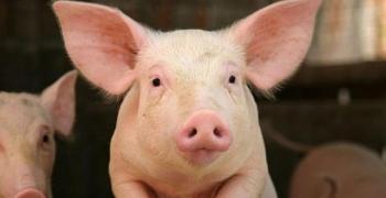 Община Мъглиж с препоръки към собствениците на животни