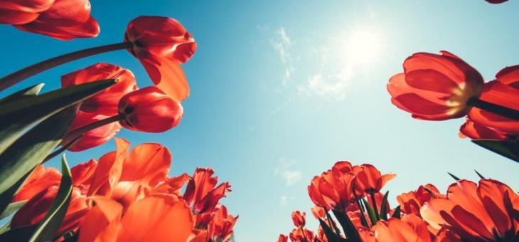 Слънчево и топло в Деня на жената
