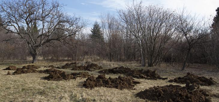 В Стара Загора засаждат живите коледни дръвчета