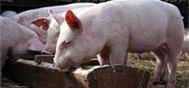 Забранява се продажбата на прясно свинско месо и сурови продукти с неизяснен произход