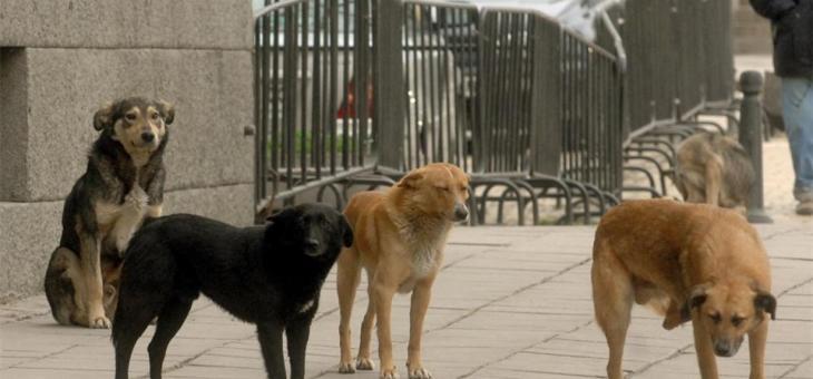 Броят бездомните кучета