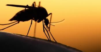 График за дезинсекция на комари през юни в Стара Загора