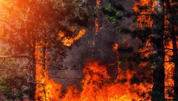 Най-опустошителните горски пожари по света от началото на века