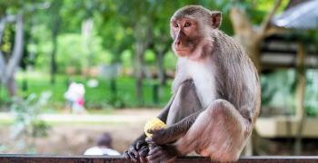 Световна класика за дивите обитатели на Тайланд   ВИДЕО