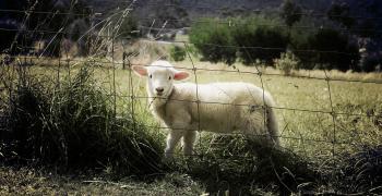 Започва кандидатстването по de minimis за изхранване на животни