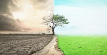 Париж подобрява градския климат със 170 000 нови дървета