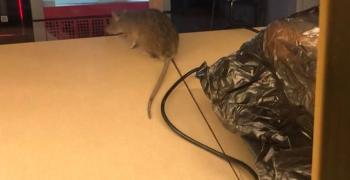 Провериха баничарницата с мишките