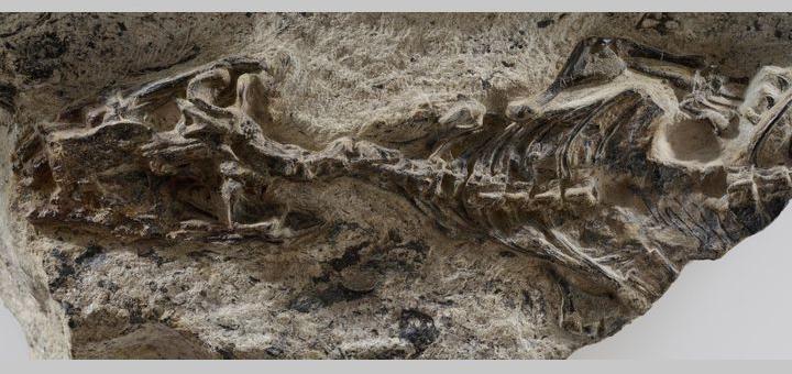 Учени идентифицираха прародителя на гущерите и змиите