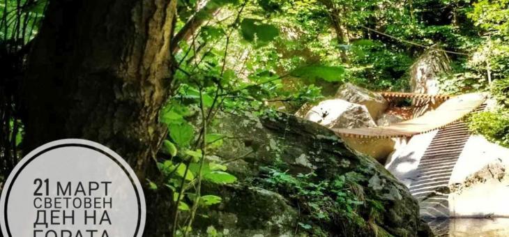 Отбелязваме вкъщи Световния ден на гората