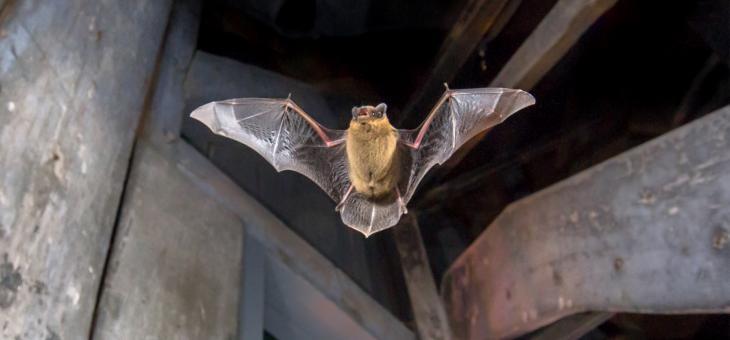 Проект учи как да опазваме редките диви животни, обитаващи градовете