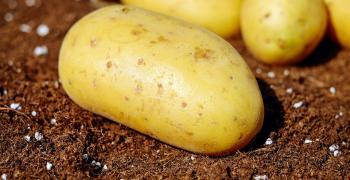 Хранителни вериги продават немски картофи като български