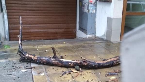 Граждани сигнализират за опасно дърво