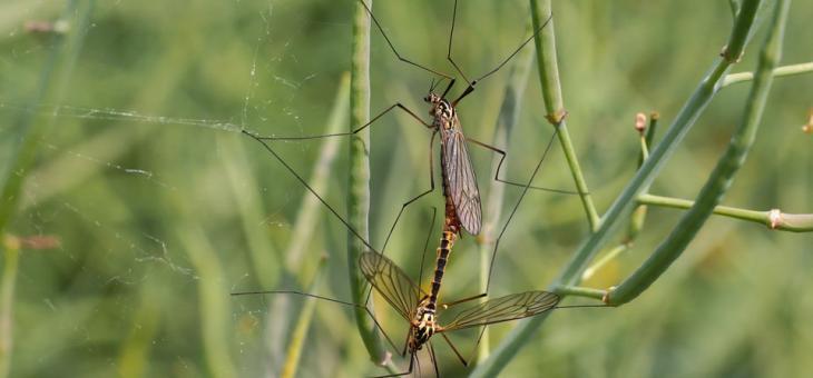 8 природни средства, които ще държат комарите далеч