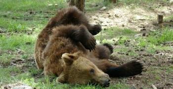 Паркът за танцуващи мечки край Белица отново очаква посетители