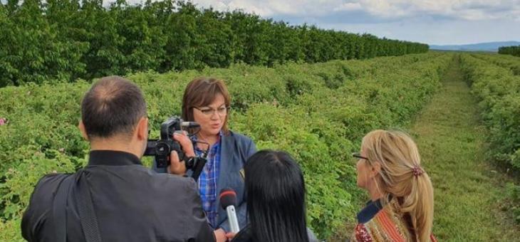 Корнелия Нинова: Нужна е безвъзмездна помощ за розопроизводителите