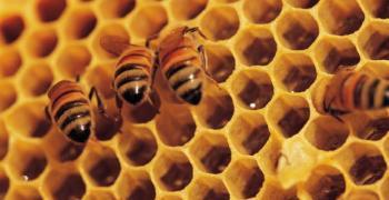 Крадец на пчелни кошери и мед ще застане на подсъдимата скамейка