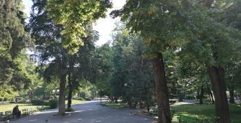 """В парк """"Пети октомври"""" ще демонстрират професионална грижа към дърветата"""