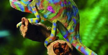 Създадоха синтетичен аналог на кожата на хамелеона