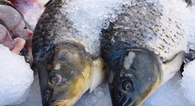 Фестивал на рибата във Велико Търново