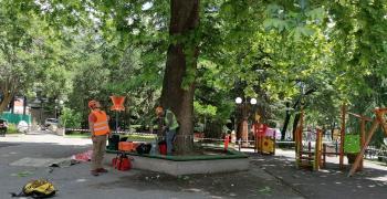 Обезопасяват опасно дърво на детска площадка в центъра на Стара Загора