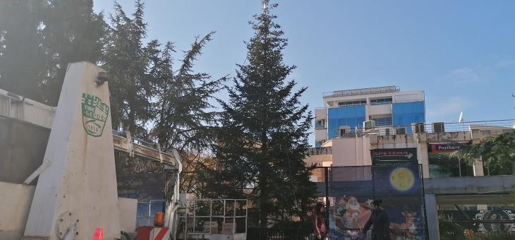 В Стара Загора коледната елха пред Общината ще грейне в петък
