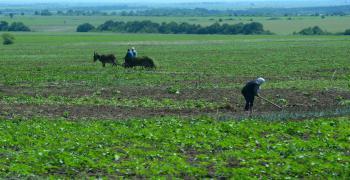 120 млн. лв. доход от субсидии не са декларирани пред НАП от земеделци